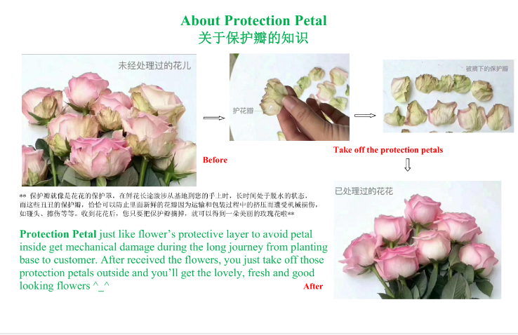beauty and the beast fresh cut wholesale rose  flowers artificial plants from Kunmming