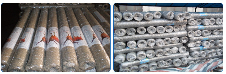 galvanzied chicken wire mesh/ wire mesh