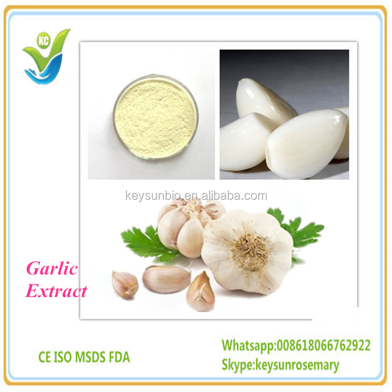 100% Natural Garlic Extract pure natural plant extracts