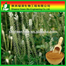 High Quality Black Cohosh Extract P.e,Black Cohosh Extract /triterpenoides Saponis/High Quality Gotu Kola Extract