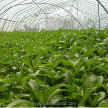 Stevia Wholesale Prices