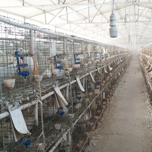 Good quality pigeon cage standard size sale in tamilnadu