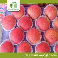 Hot selling fresh fruits red fuji apples with great price