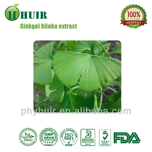 Good prices pure ginkgo biloba leaf extract