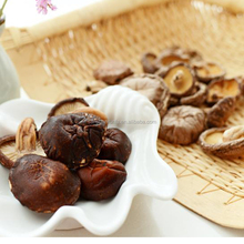 Best selling nutritious food super cheap champignon mushroom