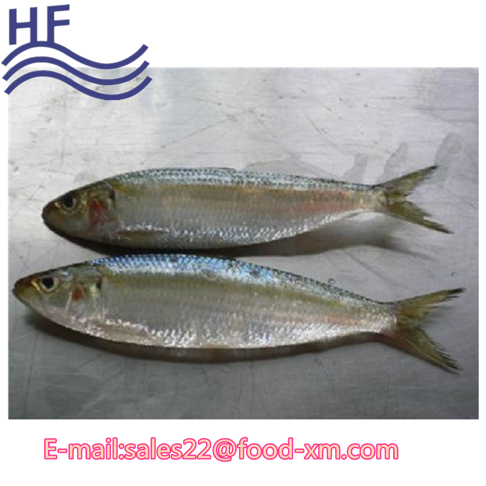 sardine fish scientific name of fish