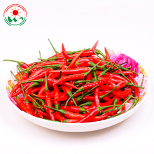 Wholesale Factory 4884 guntur kashmiri vietnam mundu mexican red chilli price in pakistan