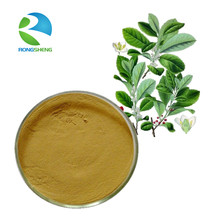 Wholesale Natural Yerba Mate Extract