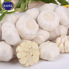 Hot selling best quality 6.0 cm fresh garlic Wholesaler