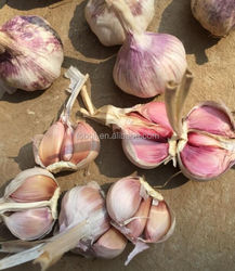 New Crop !!! Chinese Fresh Garlic in low price, high quality