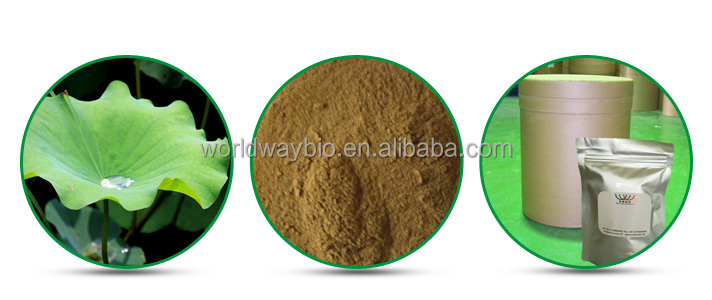 Lotus leaf flavone nuciferine powder HACCP Kosher FDA factory 20% lotus leaf extract