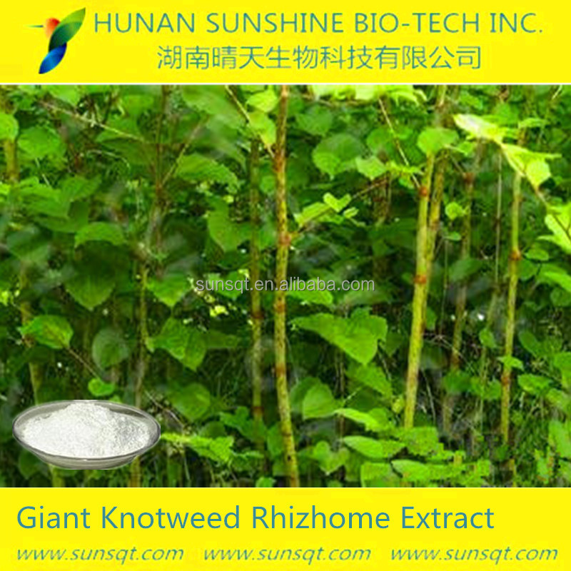 as raw material for medicine and beverage Root part To prevent food allergies Giant Knotweed Extract