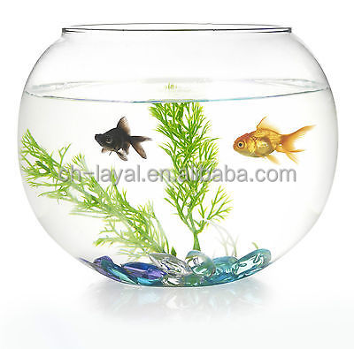 Wholesale goldfish online buy best goldfish from china for Fish bowl drinks near me