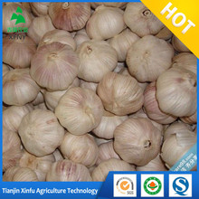 2017 China natural fresh garlic