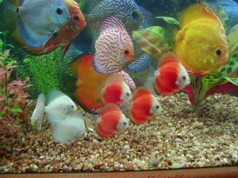 Виды рыбок для аквариума фото