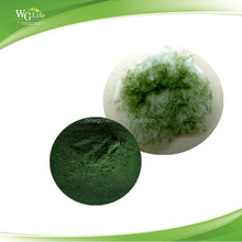 ISO Factory Supply Best Price High Protein Spirulina Powder in Bulk, Organic Chlorella Powder