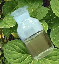 Essential Peppermint Oil Bulk