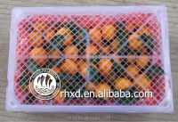 2015 Cheap fresh mandarin orange fruit/quince fruits for sale