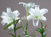 natural lily fragrance