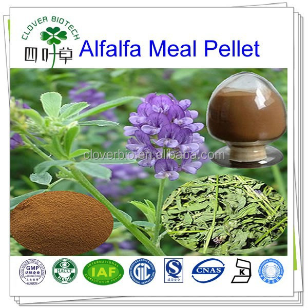 100% natural hot sale alfalfa extract/Alfalfa Meal Pellet/Medicago sativa