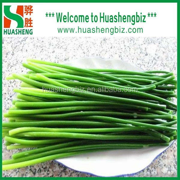 2016 Chinese Best Selling Garlic Sprout
