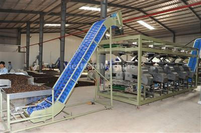 Cashew Shelling Machine SM1000