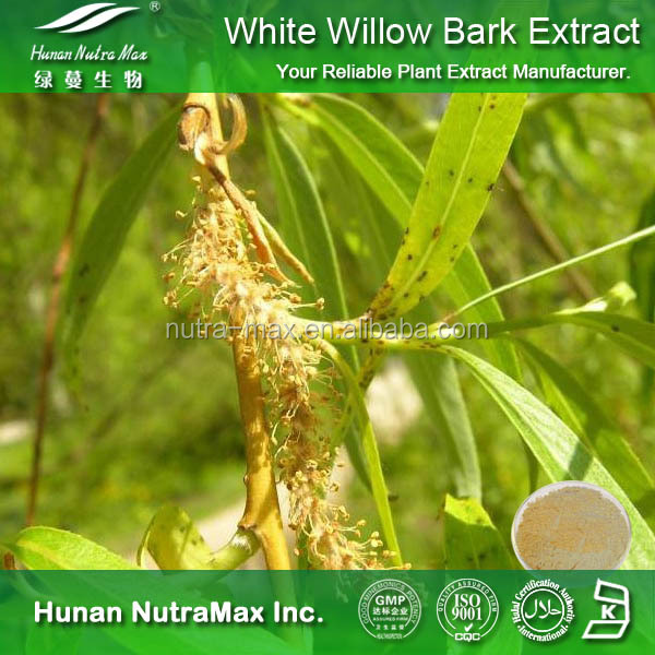 Salicin 15%-80% White Willow Bark Extract/ White Willow Bark Powder (CAS No.138-52-3)