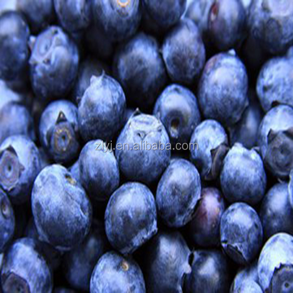 Hot selling Organic IQF Frozen Wild Blueberry