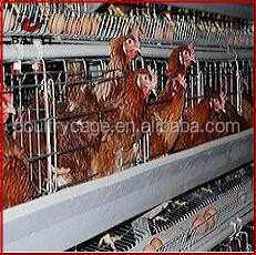 Wholesale Folding Chicken Coop Cage For Poultry Farm For Nigeria Made In China