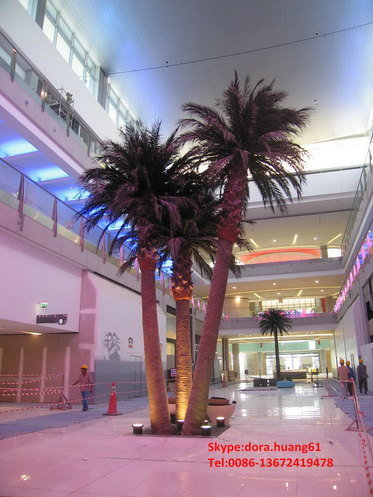 Emejing Indoor Palm Trees For Sale Contemporary - Interior Design ...