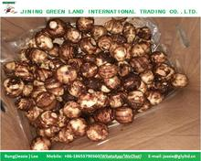 CHINESE TARO PRICE ON SALE TARO VEGETABLES FRESH TARO FOR EXPORT