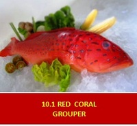 GROUPER- Red coral grouper/kerapu merah(sono)