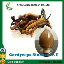 High Quality Yartsa Gunbu or Cordyceps Sinensis Extract