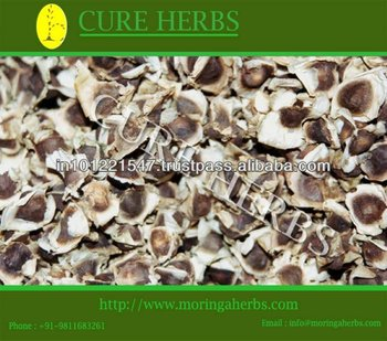 moringa oleifera seeds PKM1 cultivation in india