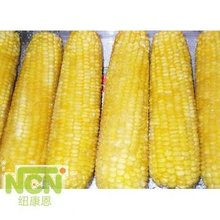 new crop frozen sweet corn specification