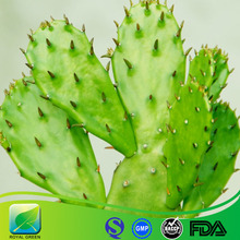Weight loss cactus prickly pear,prickly pear cactus juice,prickly pear cactus extract