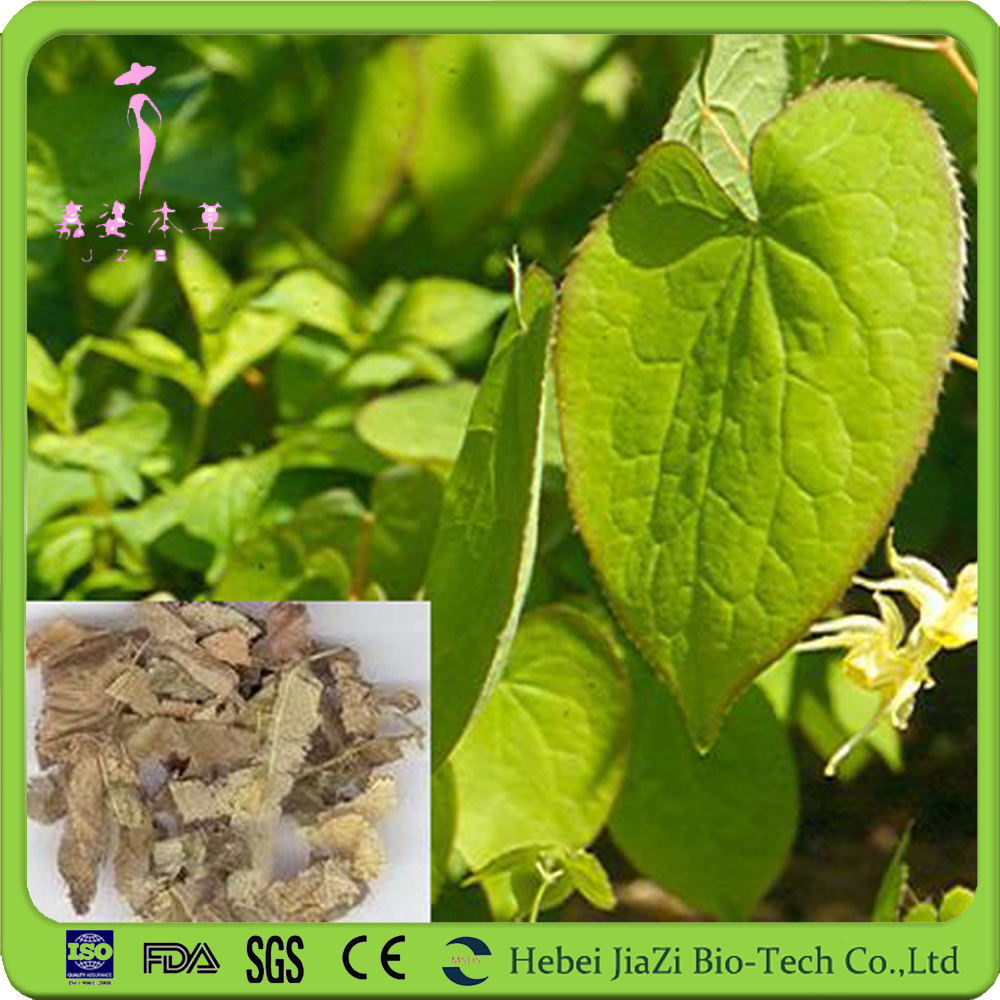 Pure icariin powder Epimedium extract with free sample