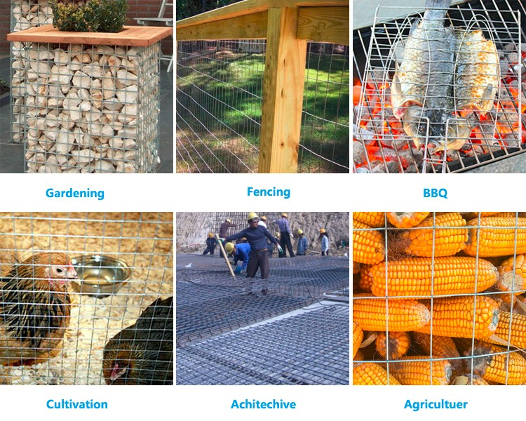 China Manufacturer metal mesh / galvanized iron welded wire mesh / the chicken cages(manufacturer in china)