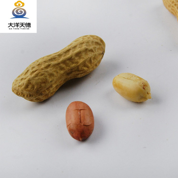 Jumbo roasted peanut in shell price