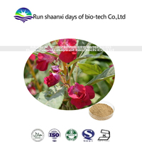 natural camphire extract /henna extract/ Lawsonia alba P.E. powder