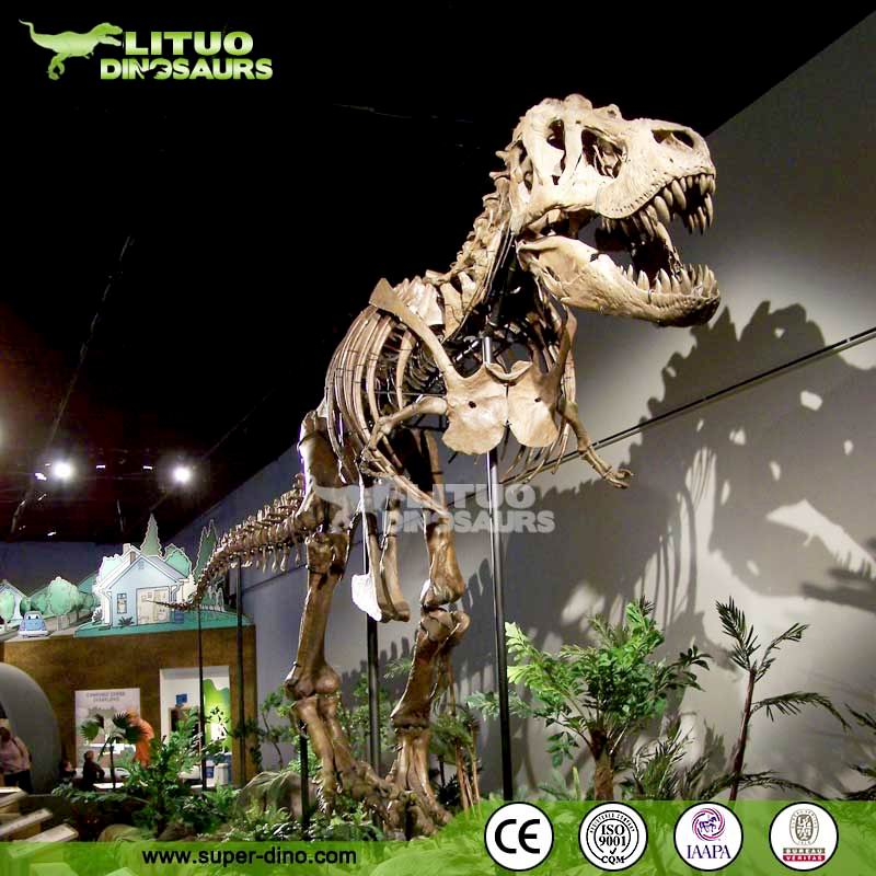 Museum Quality Fiberglass Dinosaur Skeleton Model