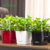 Lazy wholesale plastic cheap indoor self watering table office desk modern succulent planter small flower pot mini plant pots