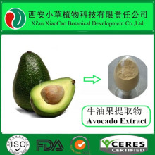 Factory Provide 100% Nature Persea Americana/ Avocado Extract