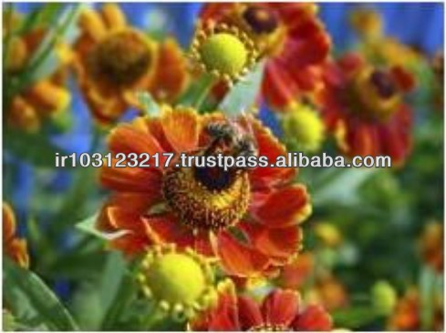 Iran Best Quality Natural Bee Flower Pure Polyflora Honey