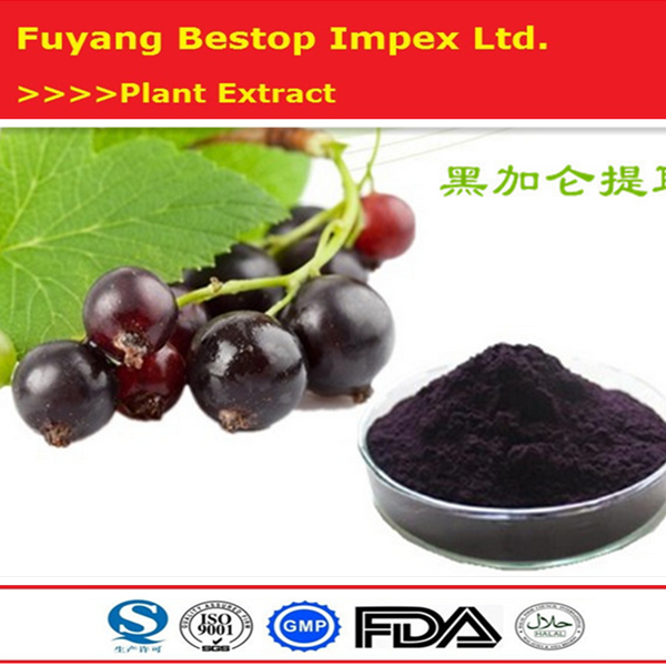 Hei Jia Lun Herbal Products Wholesaler Black Currant Seed Extract