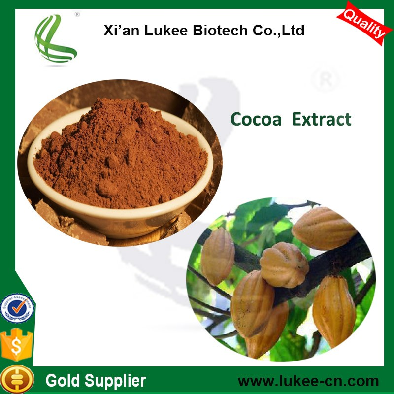 Cocoa Extract Powder Theobromine from Theobroma Cocoa Seeds