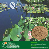 100% natural Lotus Leaf extract/Nuciferine/Flavonoids/Plant extract