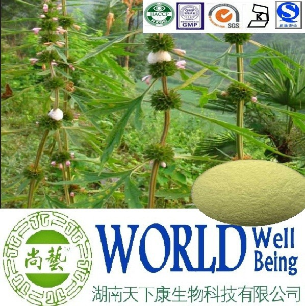 Hot sales Motherwort herb extract/Stachydrine hydrochloride 98%/Systemic lupus erythematosus factory supply