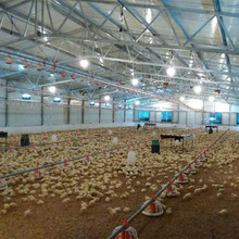 Poultry farm/chicken house/broiler shed construction