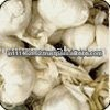 White Common Fresh Garlic